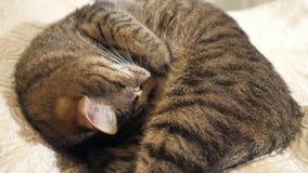 Schließen Sie oben vom Katzenschlafen stock footage