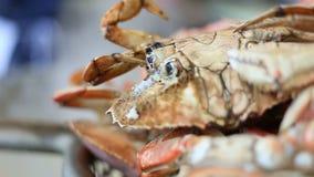 Schließen Sie oben vom Kochen der Krabbe stock video footage