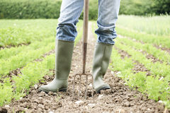 Schließen Sie oben vom Landwirt-Working In Organic-Bauernhof-Feld Lizenzfreie Stockfotos