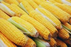 Schließen Sie oben vom Mais Stockfoto