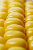 Schließen Sie oben vom Mais Lizenzfreie Stockbilder