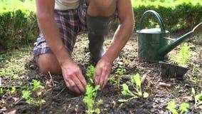 Schließen Sie oben vom Mann, der Sämlinge im Boden auf Zuteilung pflanzt stock footage