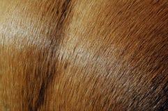 Schließen Sie oben vom Mantel eines Pferds Lizenzfreies Stockfoto