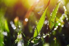 Schließen Sie oben vom nassen Gras im Morgenlicht Bokeh-Lichter im nassen Gras Stockfotografie