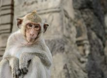 Schließen Sie oben vom netten Affen Stockfoto