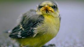 Schließen Sie oben vom netten kleinen Vogel auf einem grauen Hintergrund Stockbild