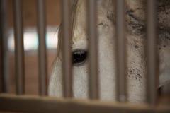 Schließen Sie oben vom Pferd im Stall Stockbild