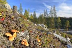 Schließen Sie oben vom Pilz und vom Lingonberry auf einem kleinen Hügel Stockfotografie