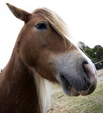 Schließen Sie oben vom Pony Stockfoto