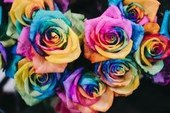 Schließen Sie oben vom Regenbogen färbte Rosen lizenzfreie stockbilder