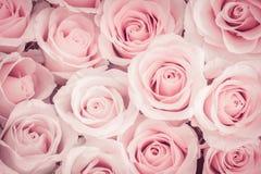 Schließen Sie oben vom Rosenhintergrund lizenzfreie stockfotografie