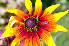 Schließen Sie oben vom roten Blumenhintergrund Lizenzfreie Stockfotos