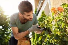 Schließen Sie oben vom schönen bärtigen Floristen im blauen T-Shirt mit den Gartenwerkzeugen, die verwelkte Blumen schneiden und  stockbild