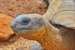 Schließen Sie oben vom Schildkröten-Kopf Lizenzfreie Stockfotos
