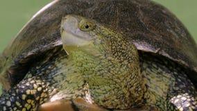 Schließen Sie oben vom Schildkrötenkopf, Sonnenstillstehen stock video