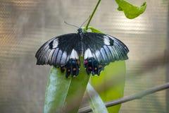 Schließen Sie oben vom Schmetterling auf einem Blatt stockbild