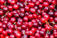 Schließen Sie oben vom Stapel von reifen Kirschen mit Stielen Große Sammlung frische rote Kirschen Reifer Kirschhintergrund Stockfoto