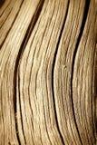 Schließen Sie oben vom toten Baum-Kabel Lizenzfreie Stockbilder