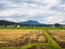 Schließen Sie oben vom trockenen Land, bereit, Reis in Japan zu pflanzen Stockbilder