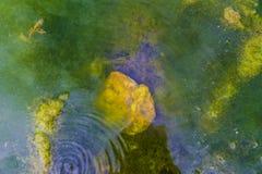 Schließen Sie oben vom Ufer von einem Fluss mit Froschfischeiern und -algen lizenzfreie stockbilder