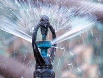 Schließen Sie oben vom Wasserspringer im Garten der Landwirtschaft Abbildung der roten Lilie Stockfoto