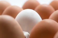 Schließen Sie oben vom weißen Ei, das durch braune Eier in einem Kasten umgeben wird Selecti Lizenzfreies Stockbild