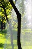 Schließen Sie oben von automatischen Bewässerungsgras und den Bäumen des Wassersystems Stockfotografie