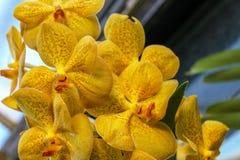 Schließen Sie oben von blühenden wilden exotischen Blumen in einer flachen Schärfentiefe des Dschungels stockfoto