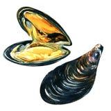 Schließen Sie oben von den appetitanregenden frischen Miesmuscheln, Aquarellillustration lizenzfreie abbildung