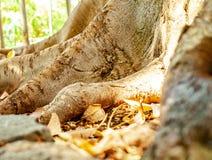 Schließen Sie oben von den Baumwurzeln mit Laub lizenzfreie stockfotos