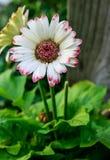 Schließen Sie oben von den Blumen in der Blüte Lizenzfreies Stockfoto
