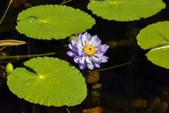 Schließen Sie oben von den Blumen in der Blüte Stockbilder