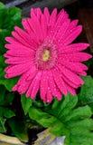 Schließen Sie oben von den Blumen in der Blüte Stockfotografie