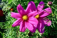 Schließen Sie oben von den Blumen in der Blüte Lizenzfreies Stockbild