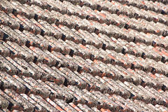 Schließen Sie oben von den Dachplatten, die in der Flechte bedeckt werden lizenzfreie stockfotografie
