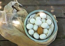 Schließen Sie oben von den Eiern in einem Bogen Stockfotografie
