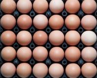 Schließen Sie oben von den Eiern im Plastikbehälter Stockfotografie