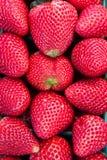 Schließen Sie oben von den frischen reifen Erdbeeren Lizenzfreies Stockbild