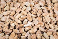 Schließen Sie oben von den gebackenen gesalzenen marinierten Erdnüssen lizenzfreie stockfotografie