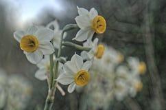 Schließen Sie oben von den gelben Blumen auf einem Gebiet Stockfotos