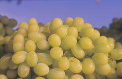 Schließen Sie oben von den grünen Trauben auf einem Fruchtstand in der weißen Taube, NY Stockbild