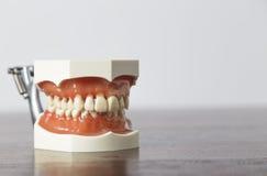 Schließen Sie oben von den Lehrmitteln der falschen Zähne Stockbild
