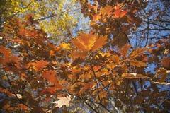 Schließen Sie oben von den mehrfarbigen Herbstniederlassungen Stockfotografie