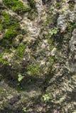 Schließen Sie oben von den Moosbeschaffenheiten auf Steinoberflächenhintergrund stockbild