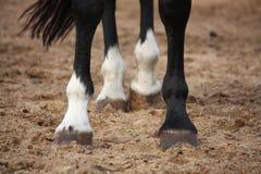 Schließen Sie oben von den Pferdebeinen Stockfoto