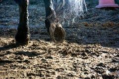 Schließen Sie oben von den Pferdehufen während des Galopps lizenzfreie stockfotos