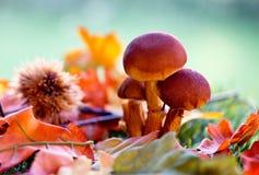 Schließen Sie oben von den Pilzen unter Autumn Foliage Stockfotos