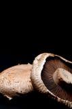Schließen Sie oben von den portabella Pilzschutzkappen auf Schwarzem Lizenzfreies Stockbild