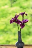 Schließen Sie oben von den purpurroten Blumen der japanischen Iris Stockbild