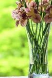 Schließen Sie oben von den purpurroten Blumen der japanischen Iris Stockbilder